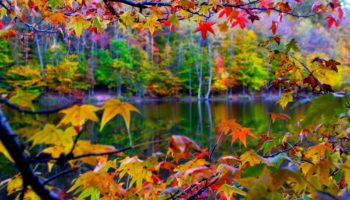 The Beautiful Autumn Wallpaper Full HD Free Download