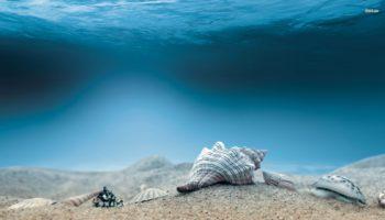 Seashells Wallpapers HD Free Download